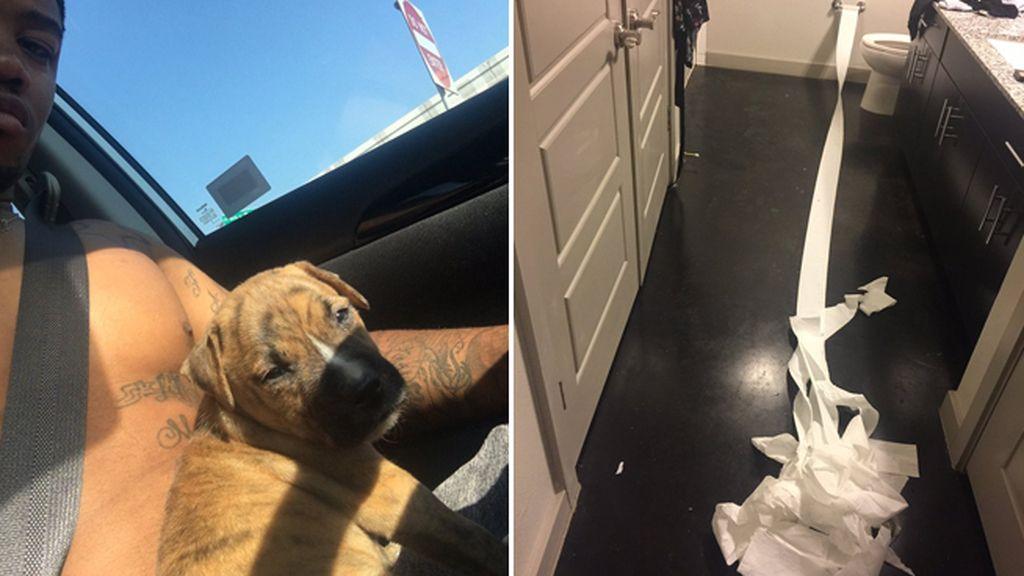 Un cachorro de Pitbull intenta limpiar sus necesidades tras ir al baño
