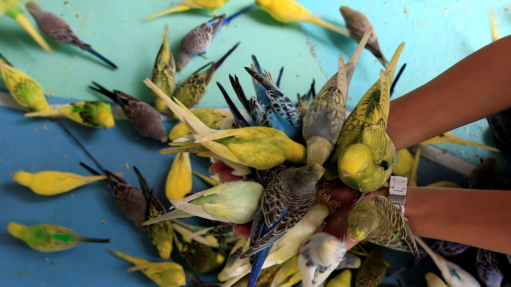 Los periquitos comen de la mano de los turistas