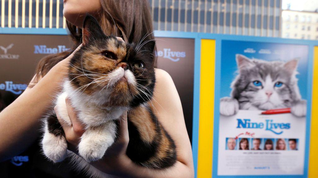 Los gatos, protagonistas en la premiere de 'Nueve vidas'