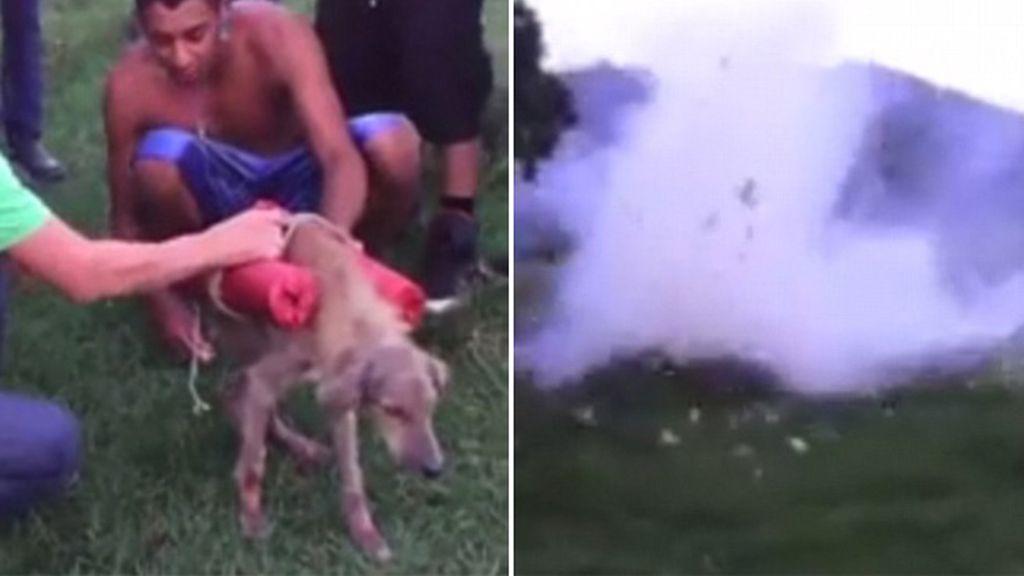 Varios jóvenes hacen explotar a un perro con varios cohetes de fuegos artificiales