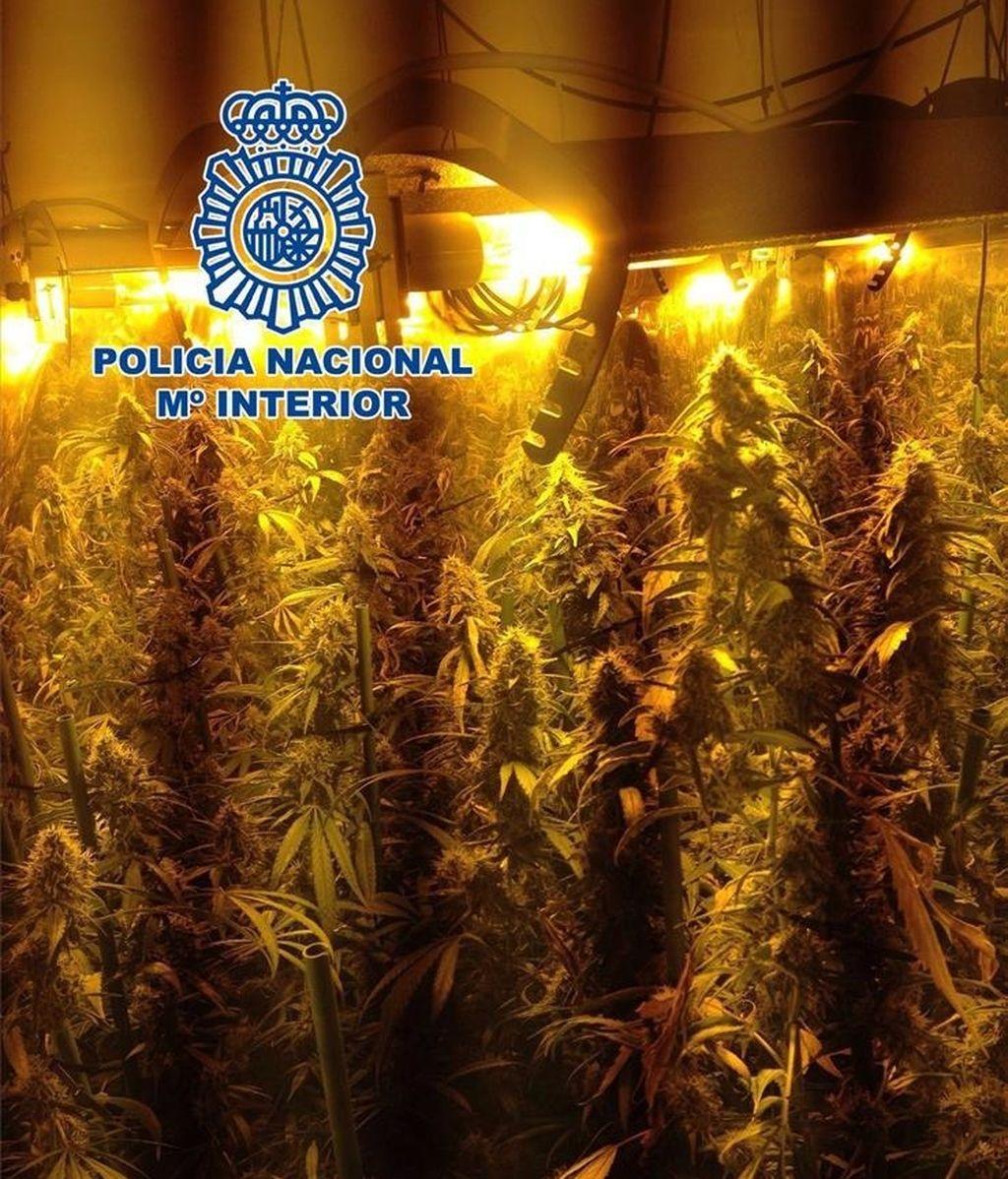 Desarticulada una banda de traficantes de drogas en Córdoba