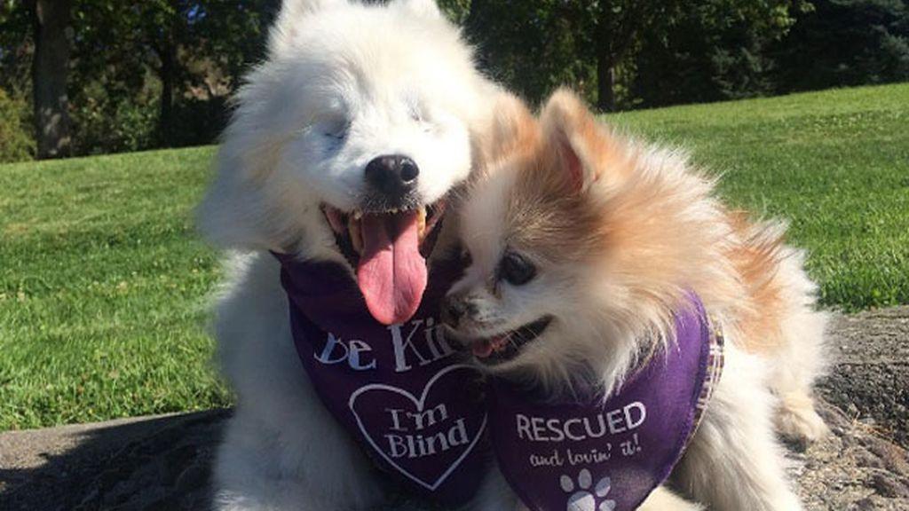 Un perro se convierte en el guía de otro can ciego