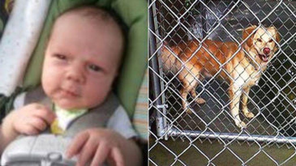 El bebe despedazado en EEUU