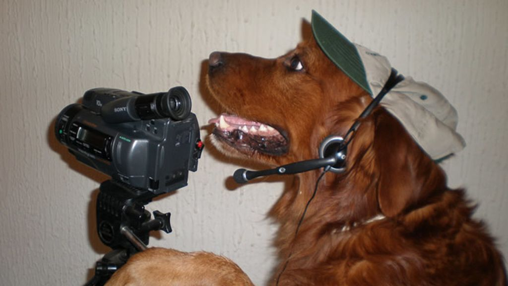 Perro cámara