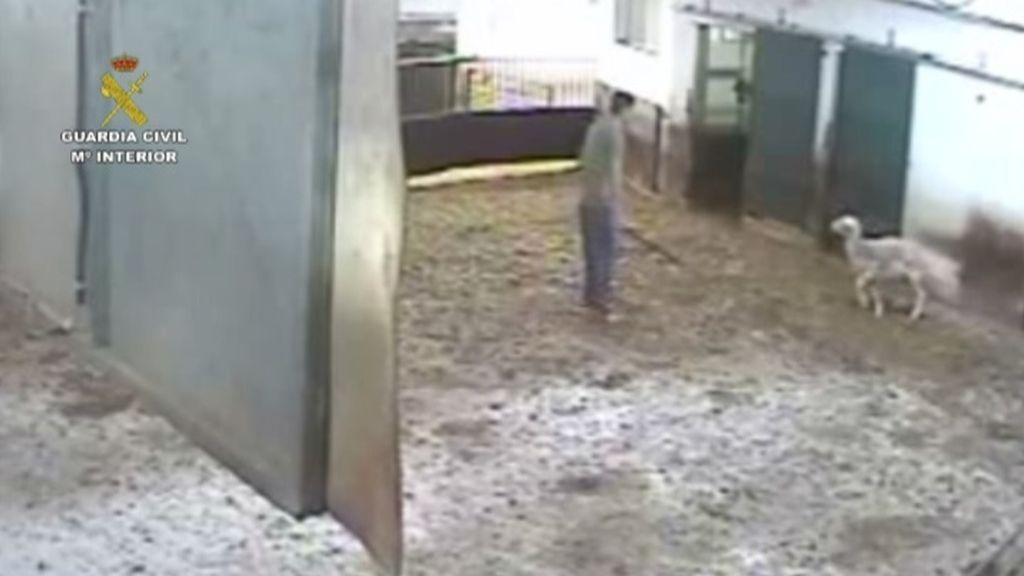 Un detenido y otro imputado por maltrato de animales domésticos