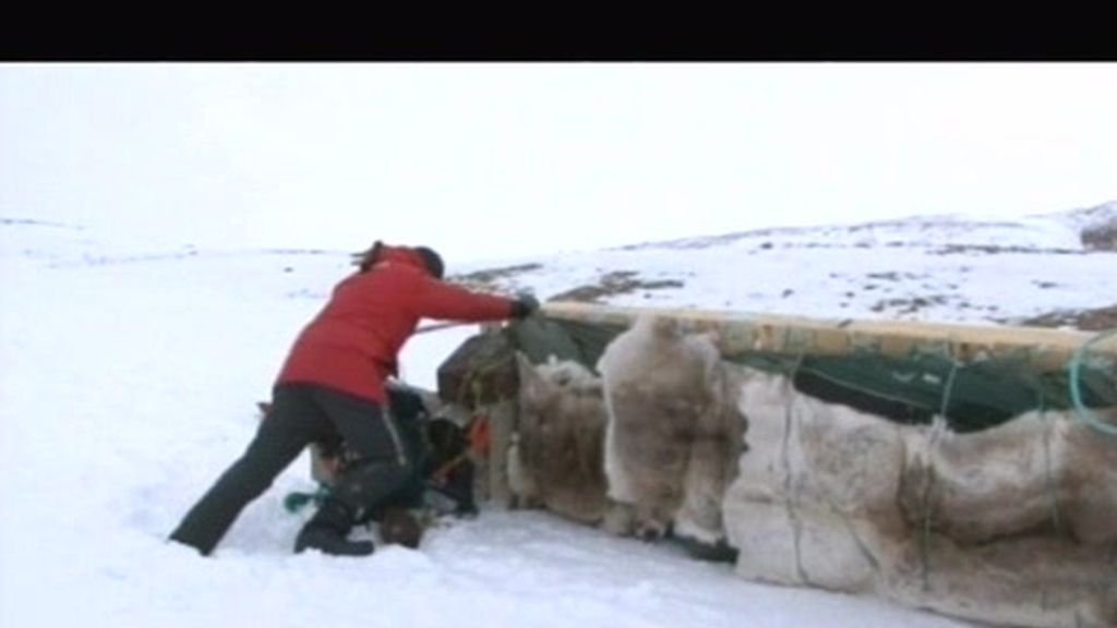 Los problemas de que los huskies transporten 400 kg. en el trineo