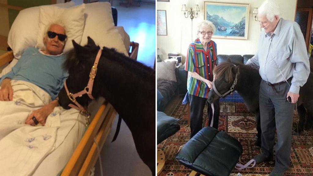 Un anciano enfermo recibe la visita de su pony en la residencia