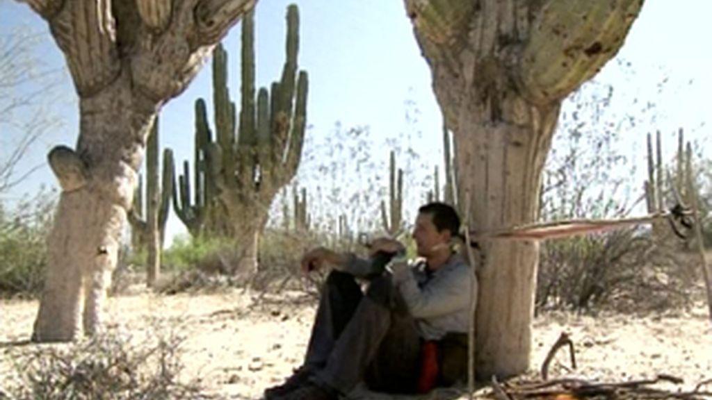 Cómo sobrevivir en el desierto de Baja California