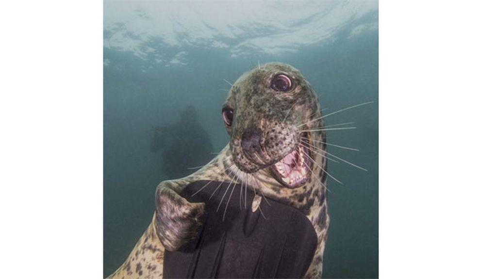 La foca más fotogénica