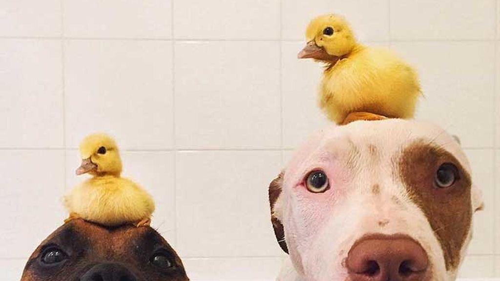 Los perros con sus nuevos compañeros de juego