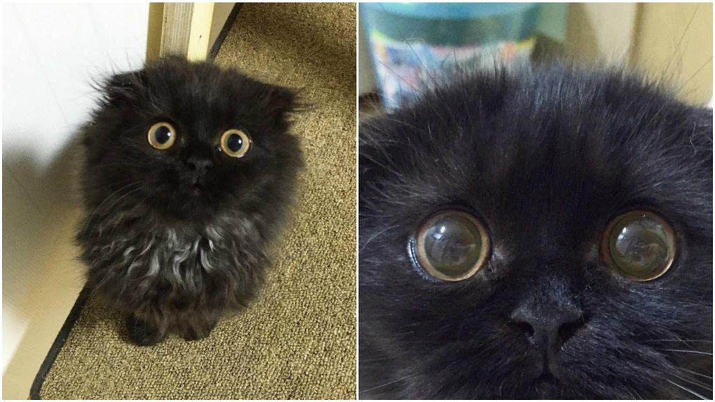El gato de los ojos grandes