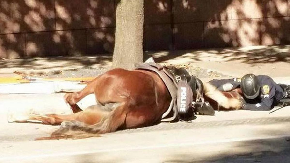 La foto de un policía desolado por la muerte de su yegua, conmueve las redes sociales
