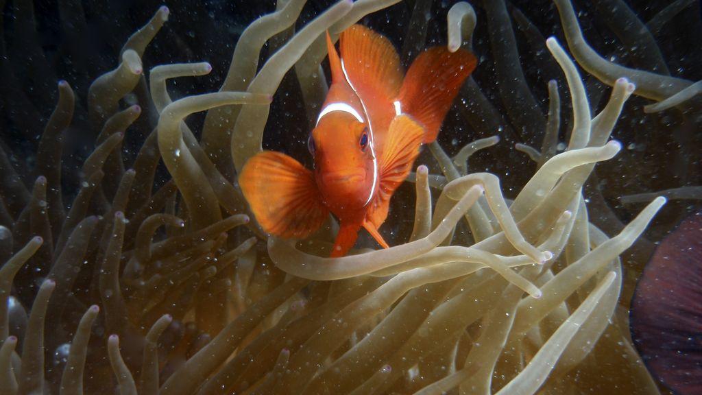 Filme animado reaviva el deseo de salvar a 'Nemo' y 'Dory' y a la Gran Barrera