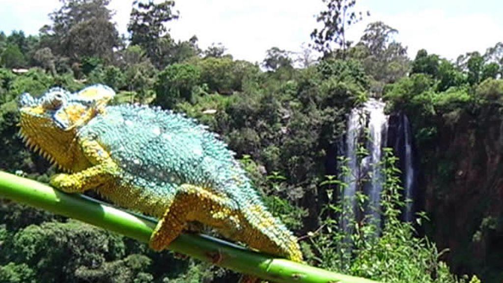 Un camaleón intentando pasar desapercibido