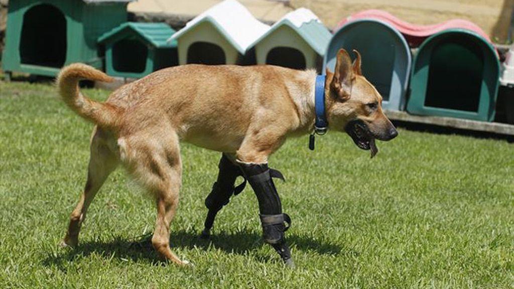 Pay de limón, un perro con una trágica historia