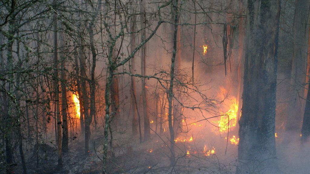 Incendio en Fragas do Eume, en Galicia