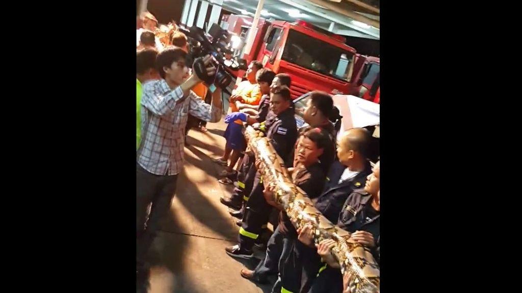 Hallan una serpiente gigante en las calles de Bangkok
