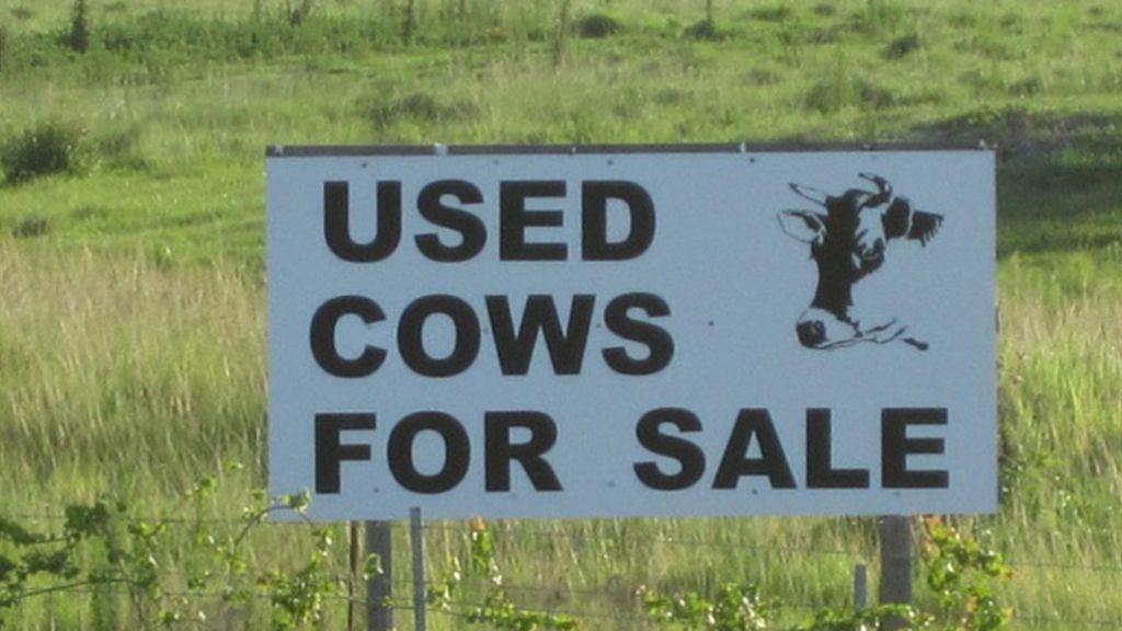 Se venden vacas usadas