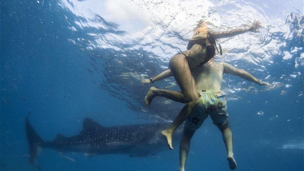 tiburón, playa, bañistas