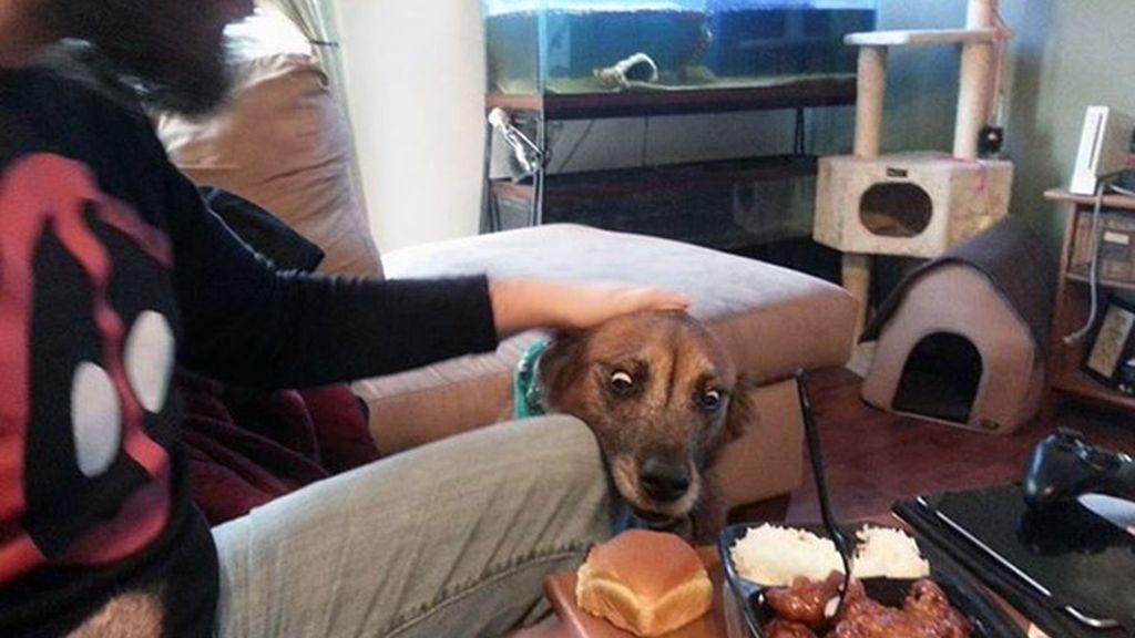 La comida, un festín para las mascotas