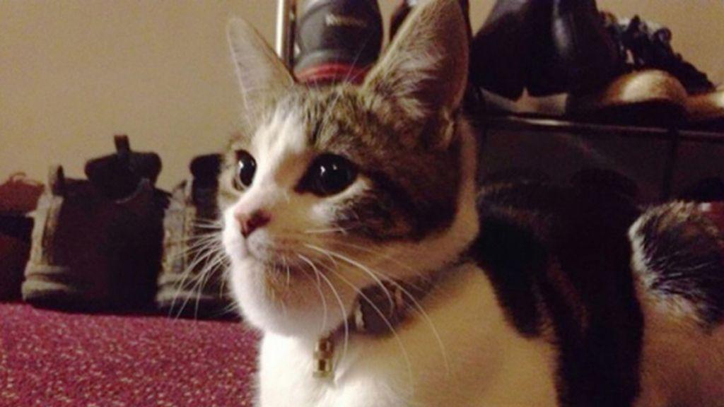 Gatos atacados por avispas