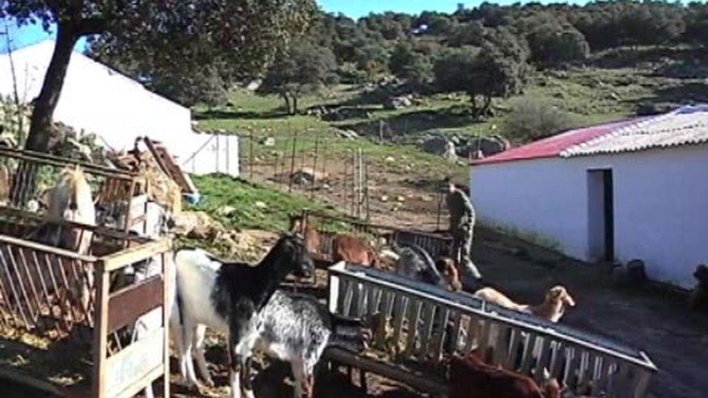 Se buscan pastores para la sierra de Cádiz