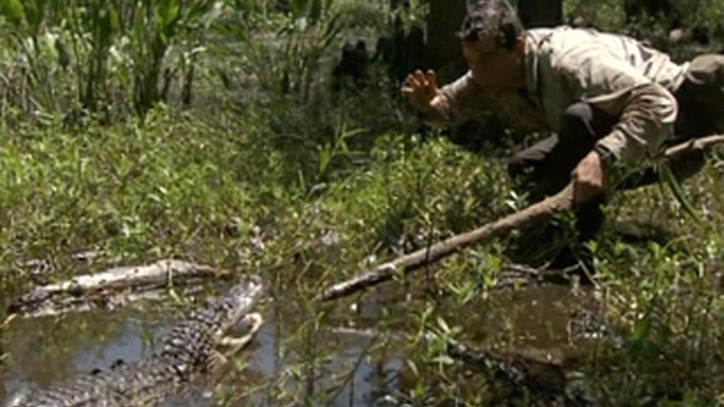 Cómo sobrevivir en el sur profundo (Luisiana)