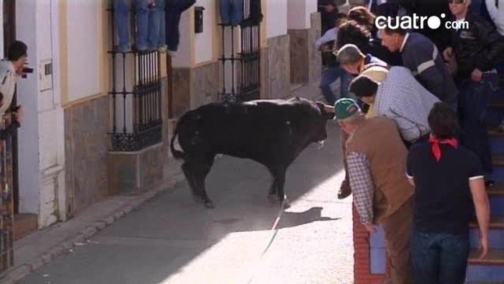 Toro de Cuerda en Gaucín, Málaga