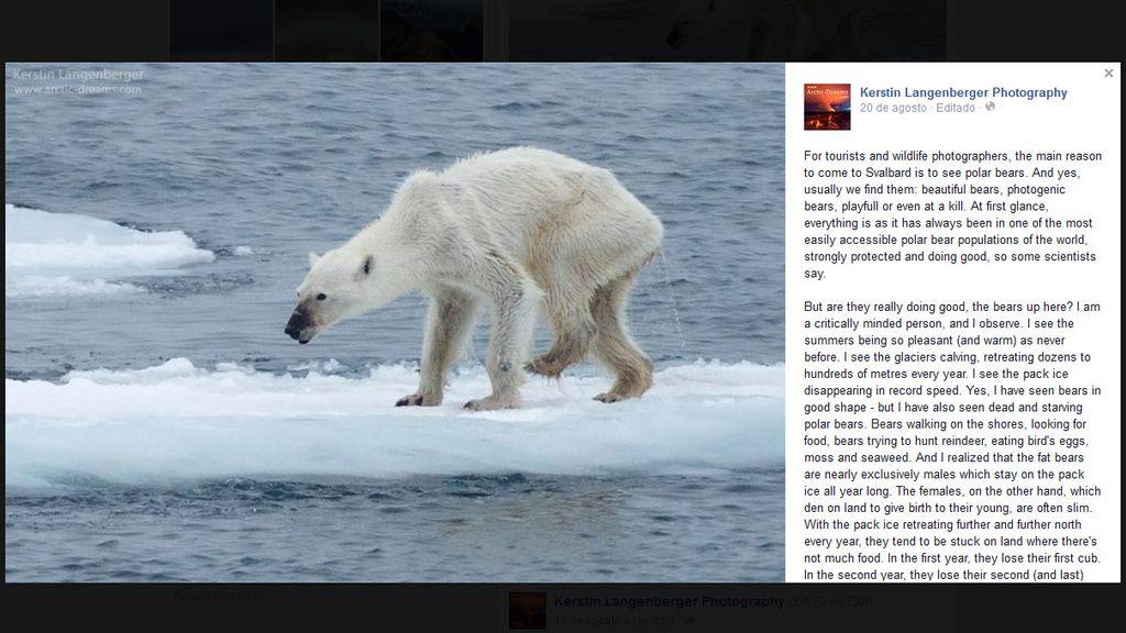 La desgarradora imagen de una osa polar desnutrida, icono del cambio climático