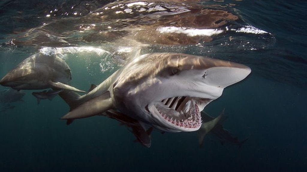 'El grito', un terrorífico tiburón en Sudáfrica