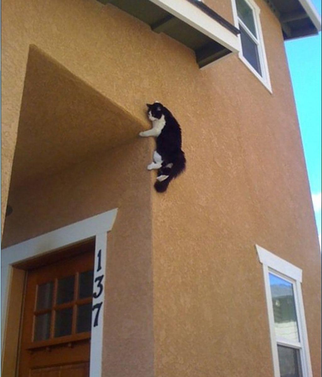 Este pequeño gato tiene un largo viaje hacia abajo