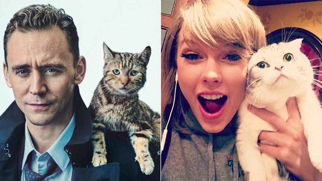 Adora los gatos, ¿será así como ha conquistado definitivamente a Taylor?