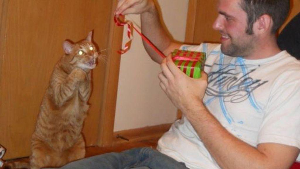 Gatos infernales: Divertidas imágenes que muestran su parte más siniestra