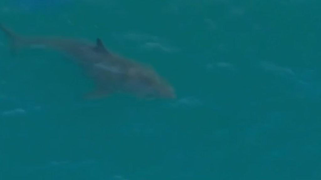 Máxima alerta en la costa de Perth por la presencia de un enorme tiburón blanco