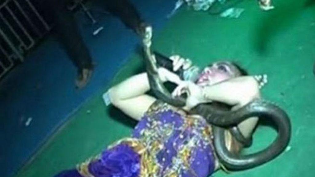 cantante muere mordida,mordida serpiente,mordida de cobra,Irma Bule, Indonesia
