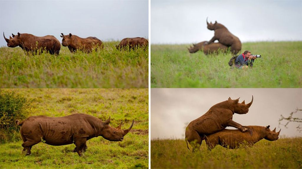 Greg Armfield, rinocerontes