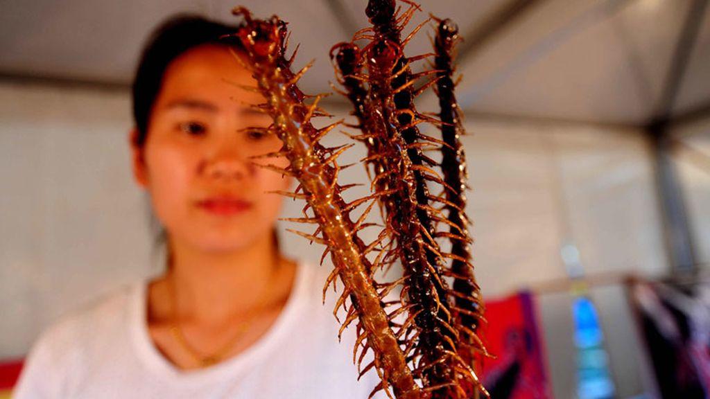 Festival de comida a base de insectos en China