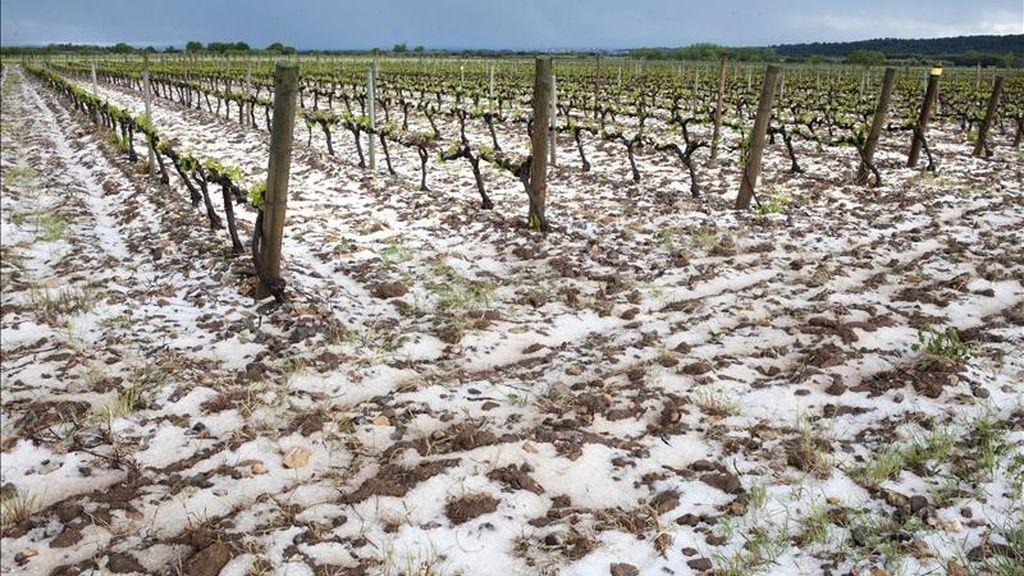 Una tormenta de granizo en Girona daña 150 hectáreas de cultivos