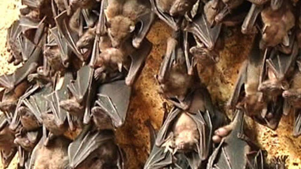 Murciélagos en Bali