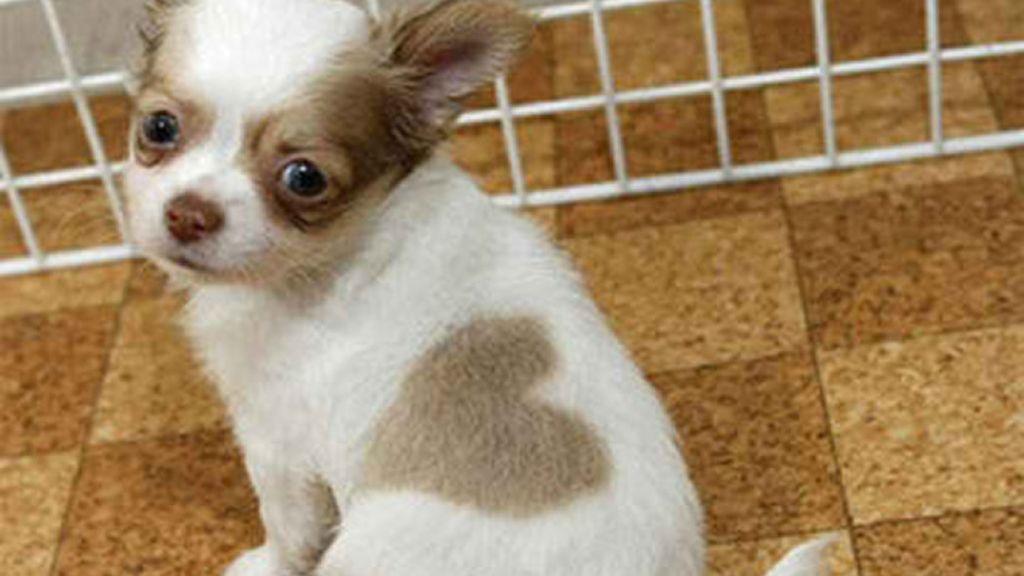 Finalista concurso perro cámara