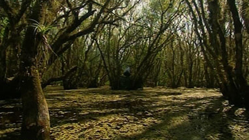 Cómo sobrevivir en los Everglades
