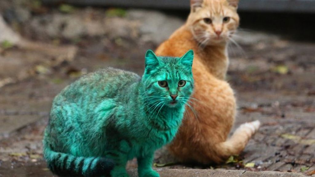 El misterioso gato verde