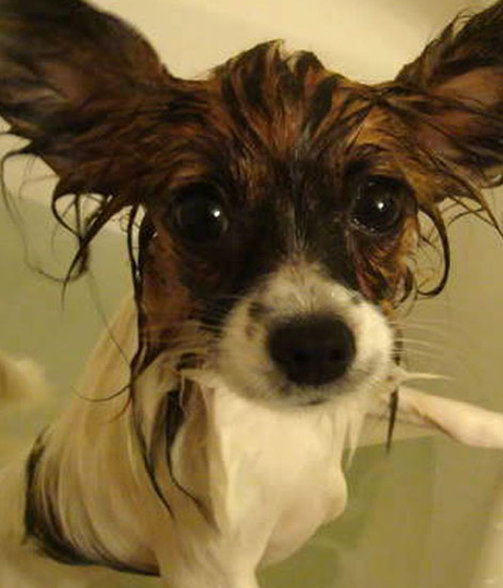 ¡Odio bañarme!