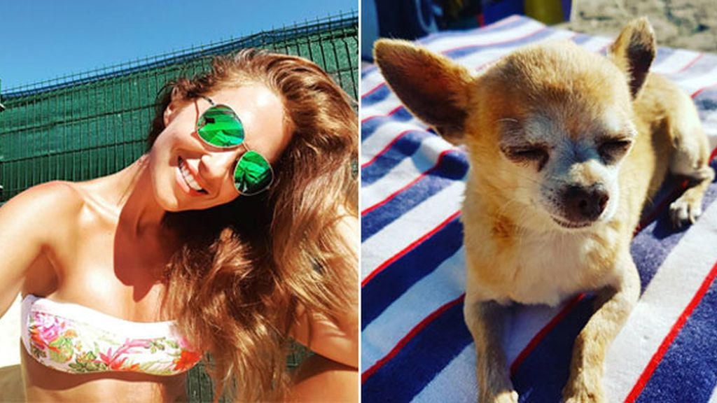 Mowgli, el chihuahua de Paula Echevarría, disfruta tanto del sol como su dueña