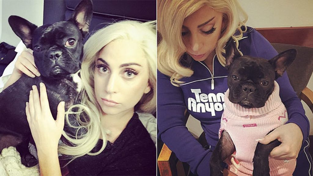 Lady Gaga viste a su bulldog para que sea divinity