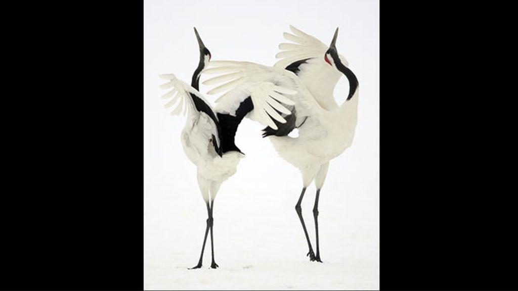 Ganador en la categoría 'Los pájaros y las abejas', por Simone Sbaraglia