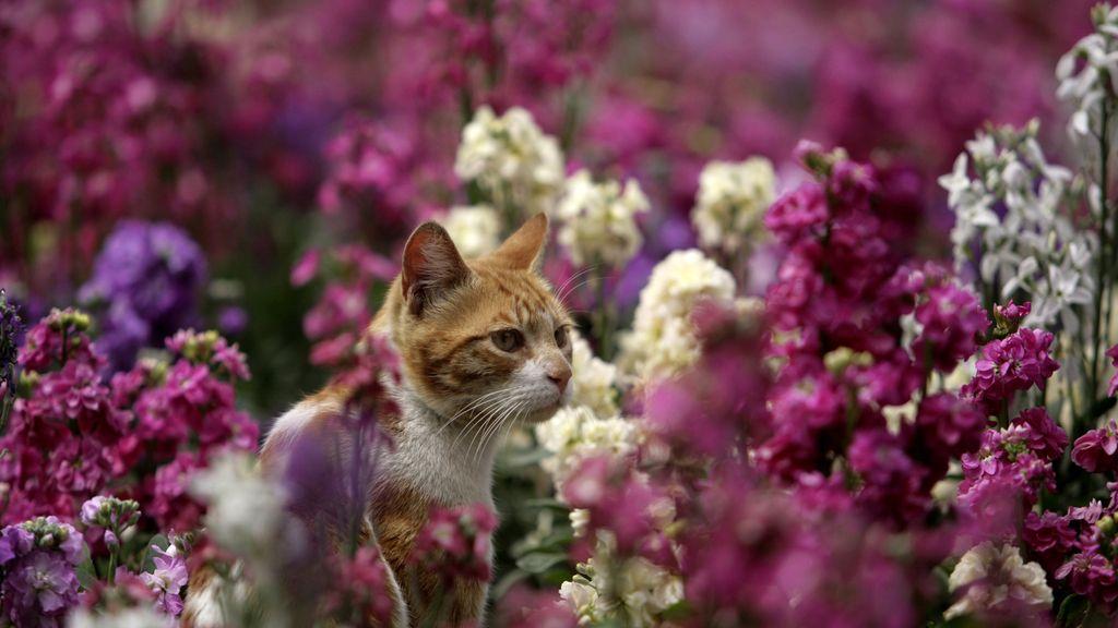 ¿Si te gustan los gatos eres más inteligente?