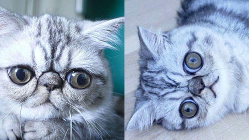 Herman, el gato estrella de las redes sociales