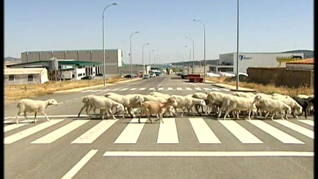 La crisis no ha llegado al pequeño pueblo de Ólvega, en Soria