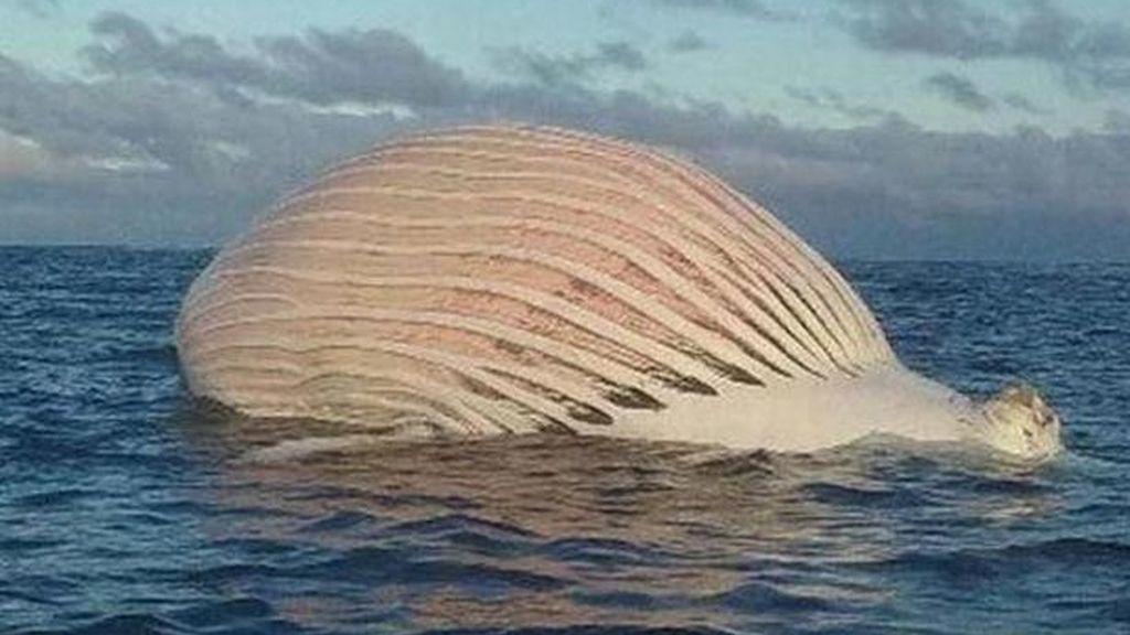 ¿Qué crees que es esta extraña figura? Un cadáver de una ballena